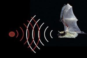 Ультразвуковой датчик расстояния и уровня: принцип работы